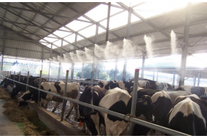 Туманообразование в коровниках, свинарниках, на птицефермах